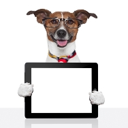 Your website is like a cyber pet